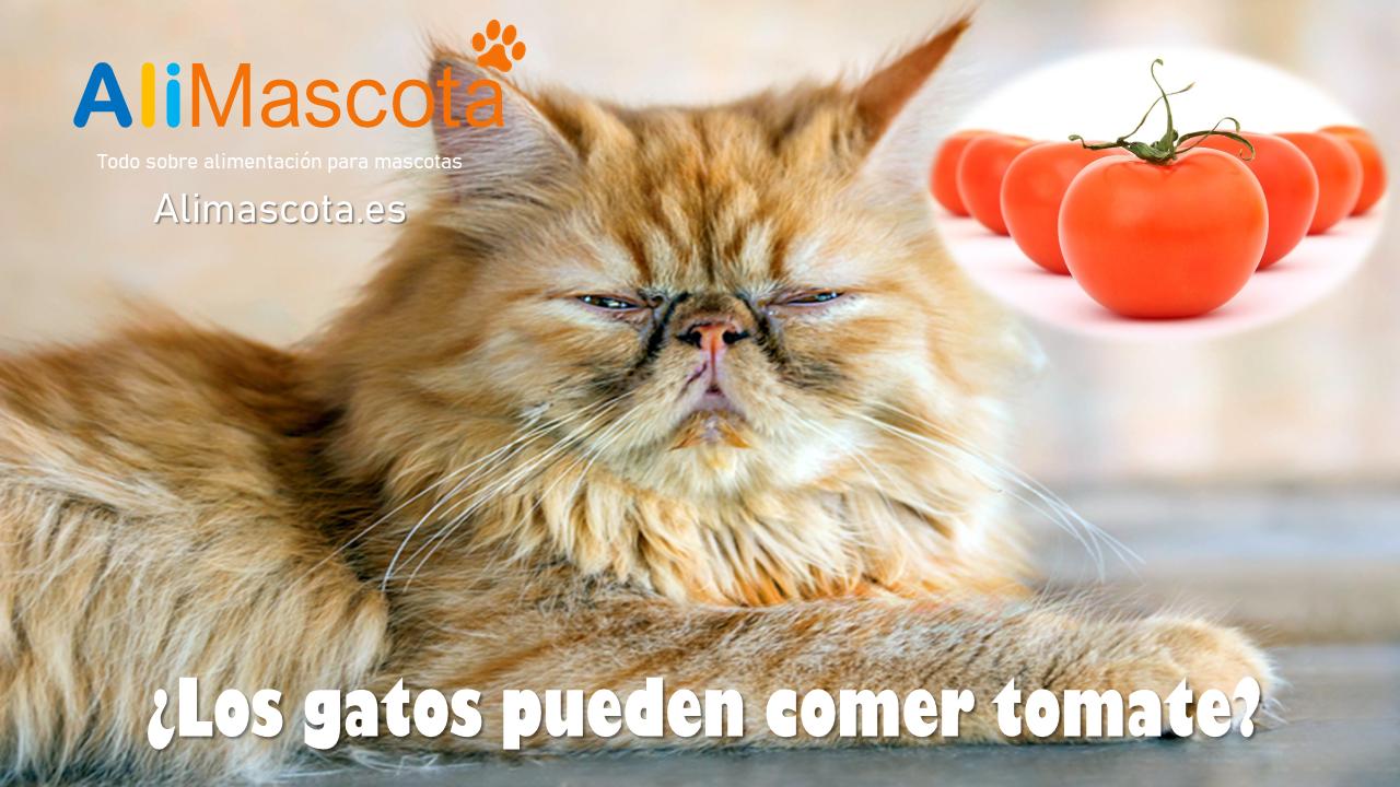 ¿Los gatos pueden comer tomate?