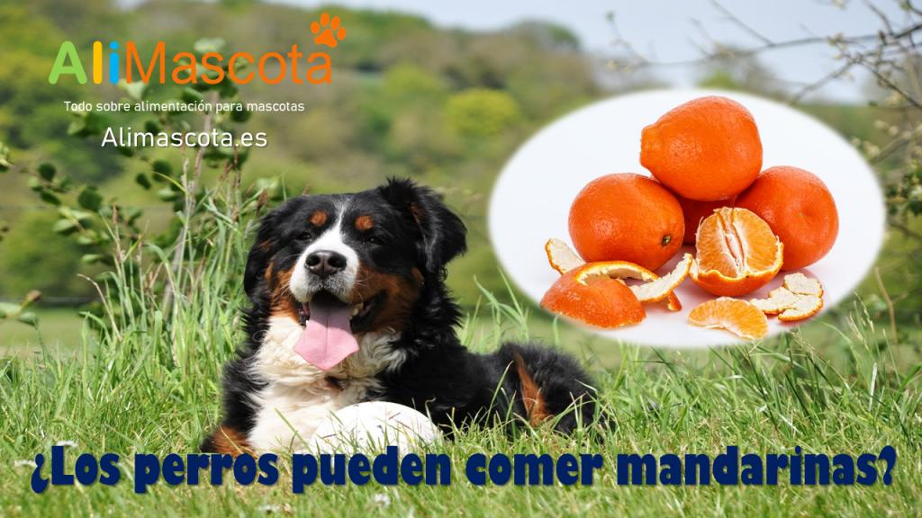 Los perros pueden comer mandarinas