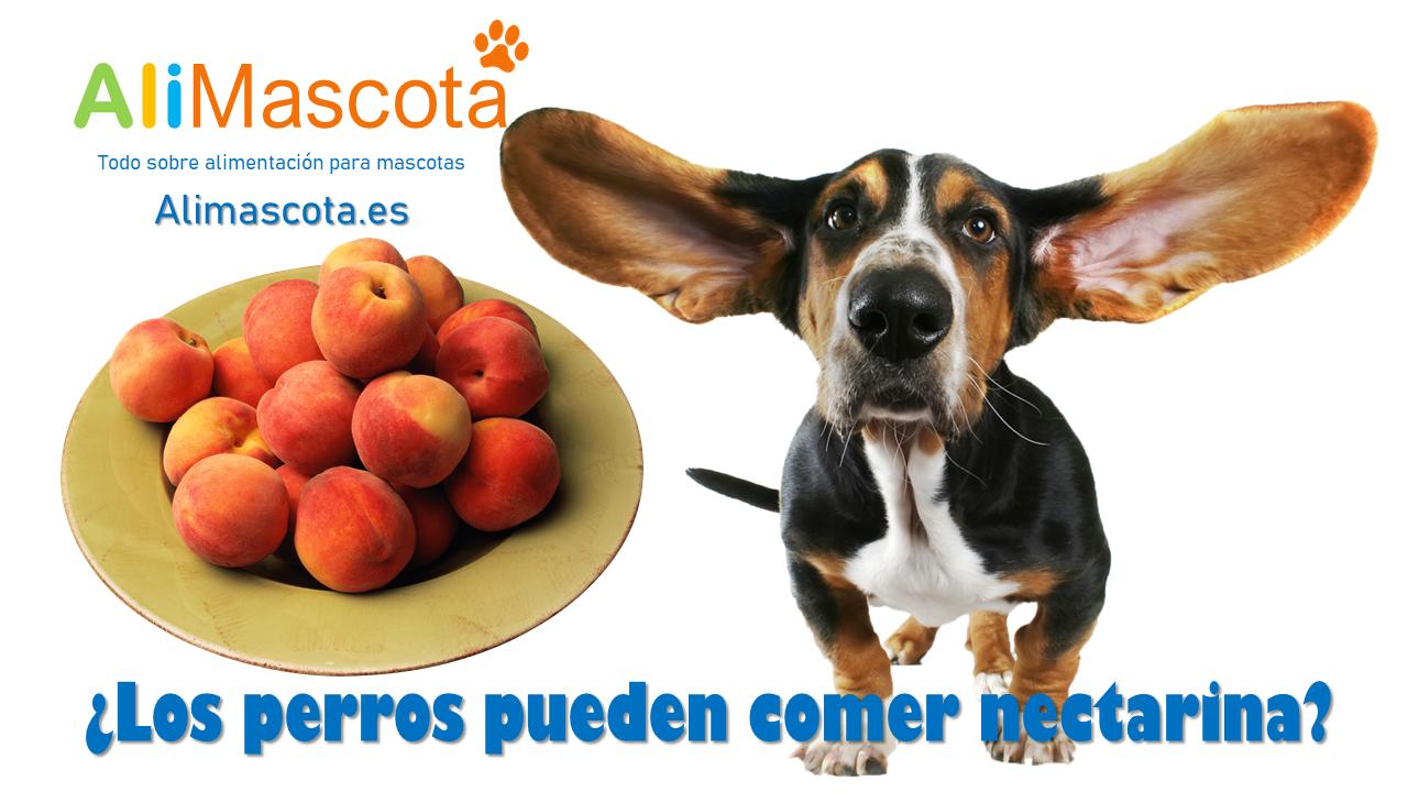 ¿Los perros pueden comer nectarina?