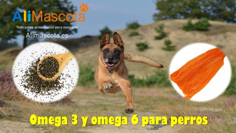 Omega 3 perros y Omega 6 para perros