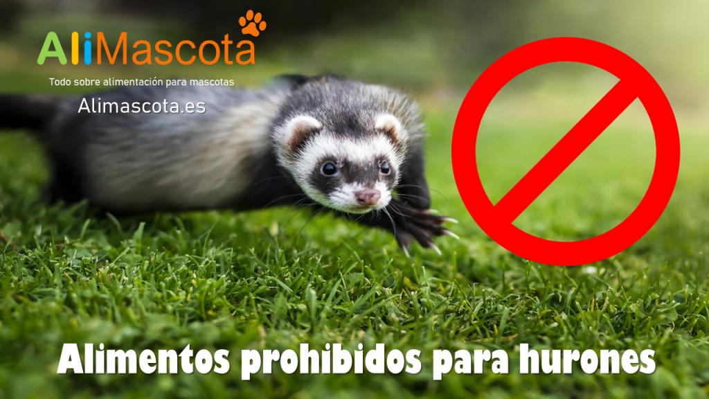 Alimentos prohibidos para hurones
