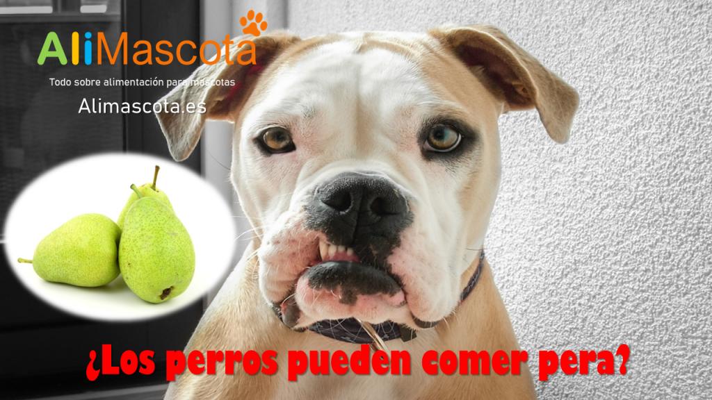 Los perros pueden comer pera