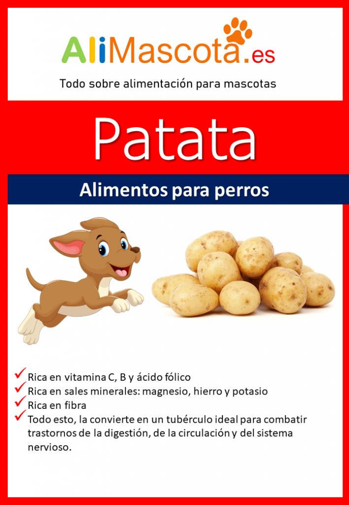 Patatas para perros