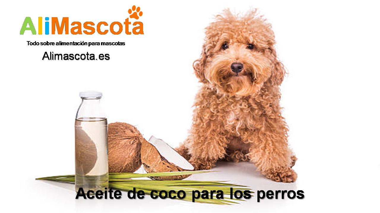 Aceite de coco para los perros