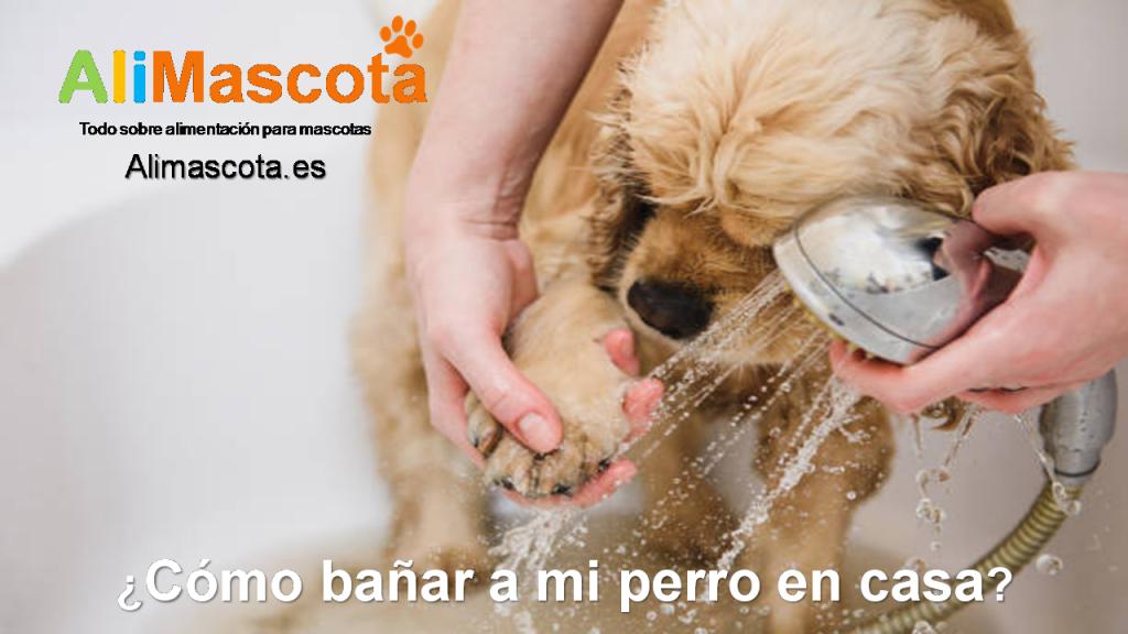 Cómo bañar a mi perro en casa