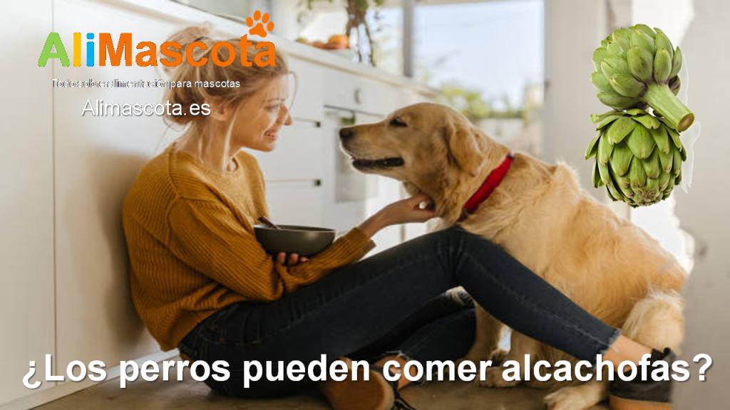Los perros pueden comer alcachofas