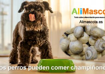 los perros pueden comer champiñones