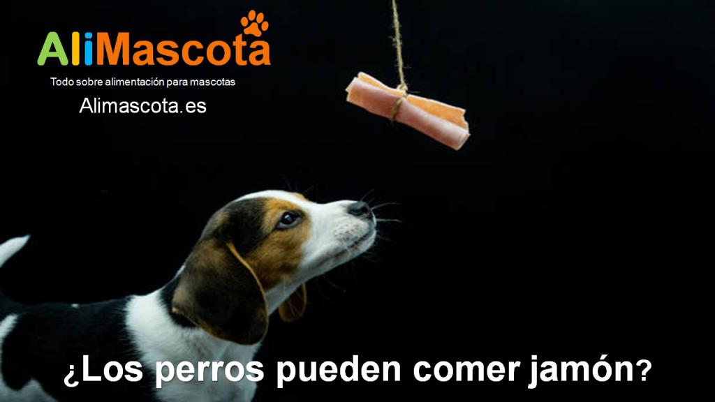 Los perros pueden comer jamón
