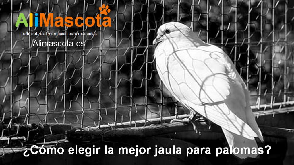 Como elegir la mejor jaula para palomas