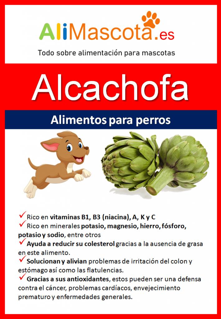 Beneficios de la alcachofa para perros