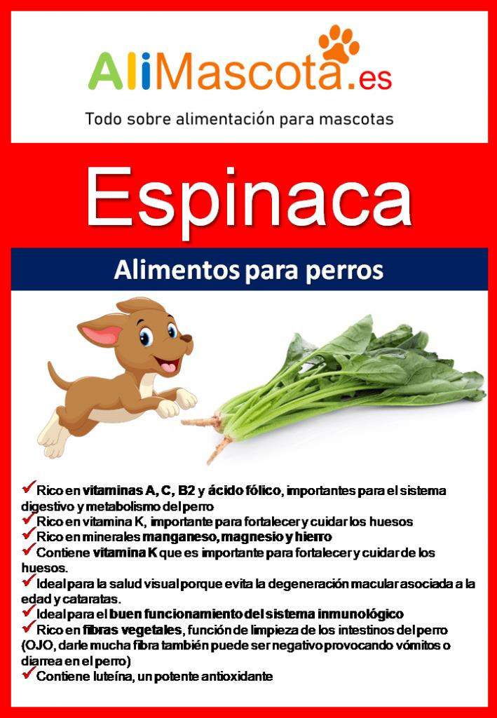 Beneficios de la espinaca para perros