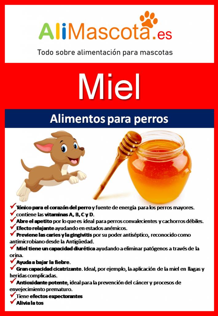 Beneficios de la miel para perros