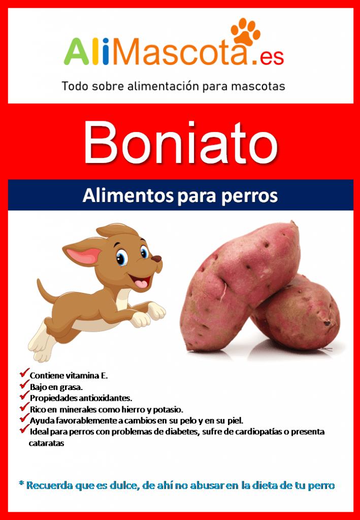 Beneficios del boniato para perros