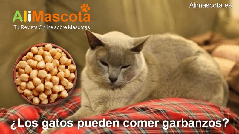Los gatos pueden comer garbanzos
