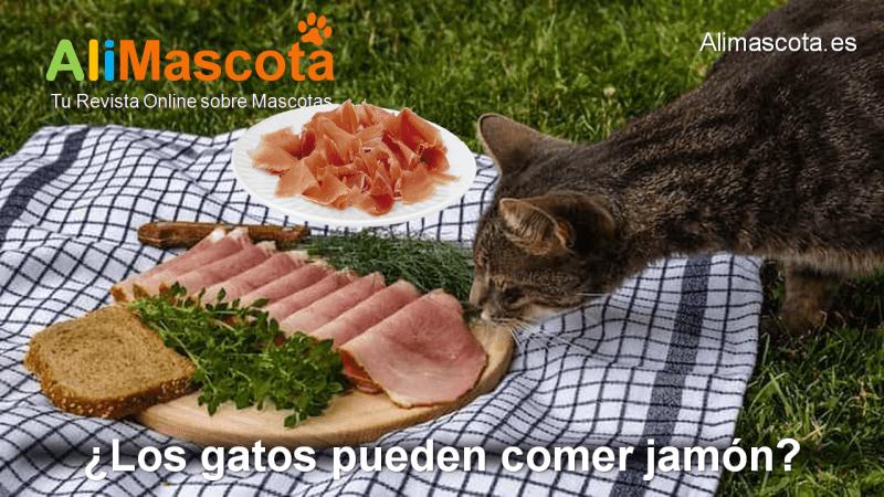Los gatos pueden comer jamón