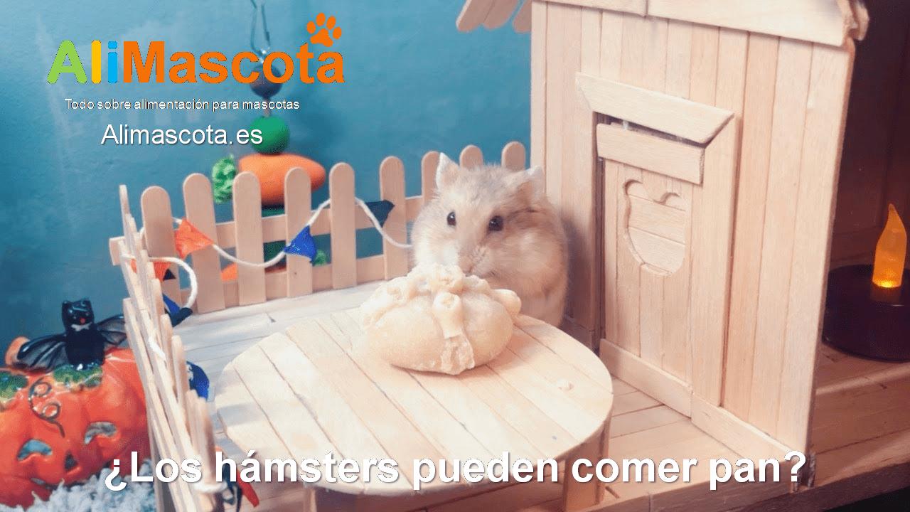 ¿Los hámsters pueden comer pan?