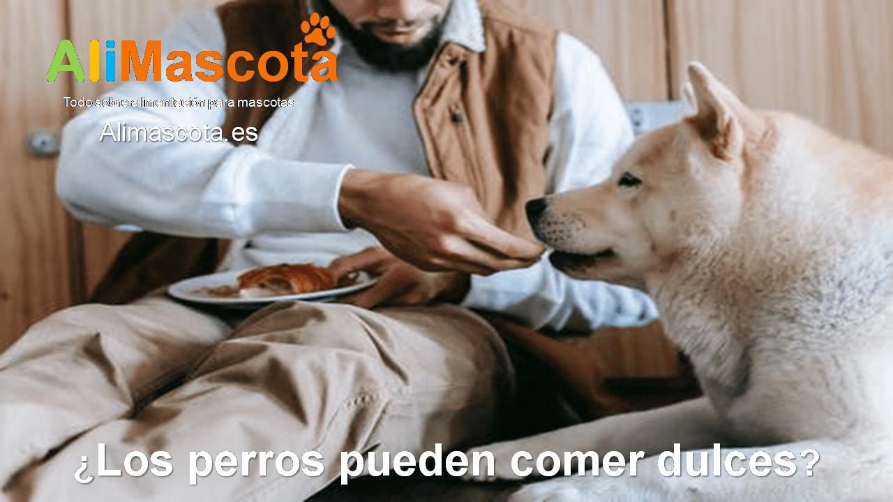 ¿Los perros pueden comer dulces?