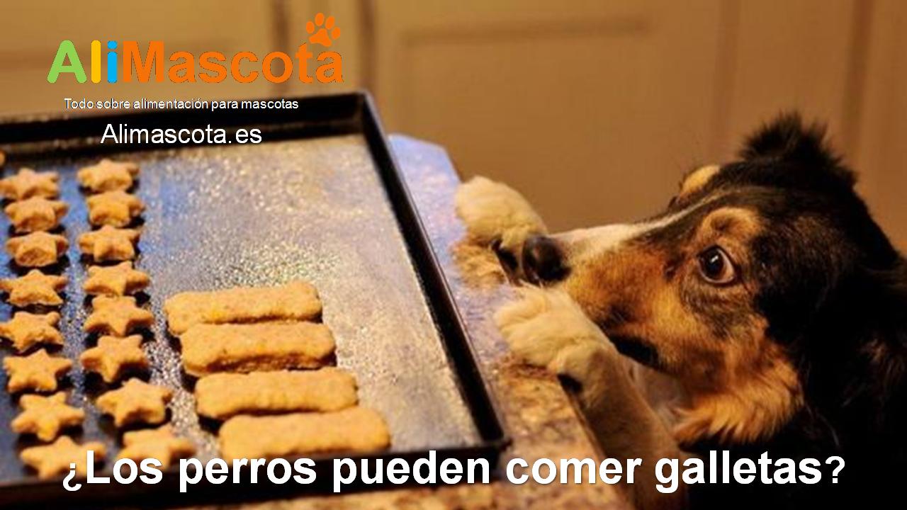 Los perros pueden comer galletas