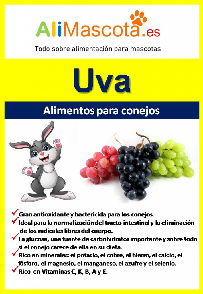 Beneficios de las uvas para conejos