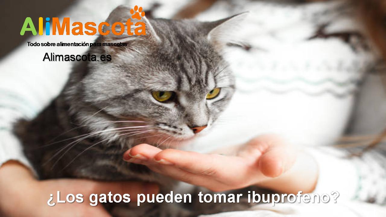 ¿Los gatos pueden tomar ibuprofeno?