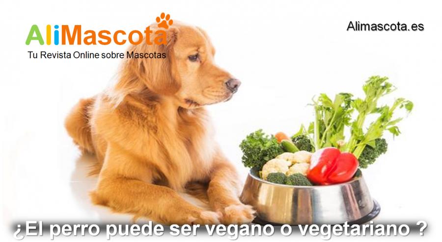 El perro puede ser vegano o vegetariano