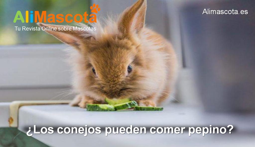 Los conejos pueden comer pepino