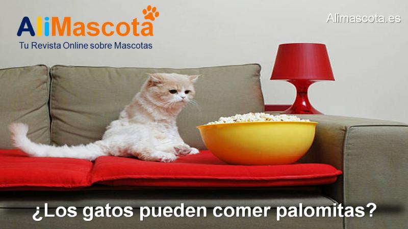 Los gatos pueden comer palomitas