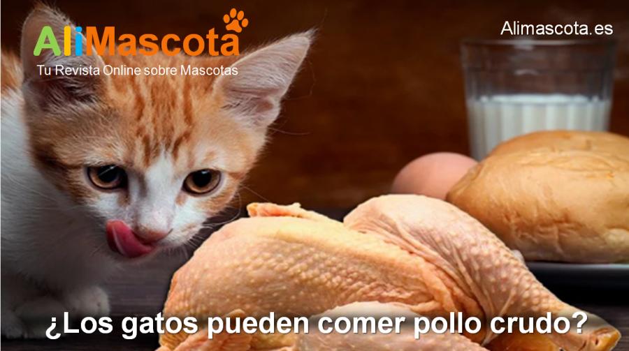 Los gatos pueden comer pollo crudo
