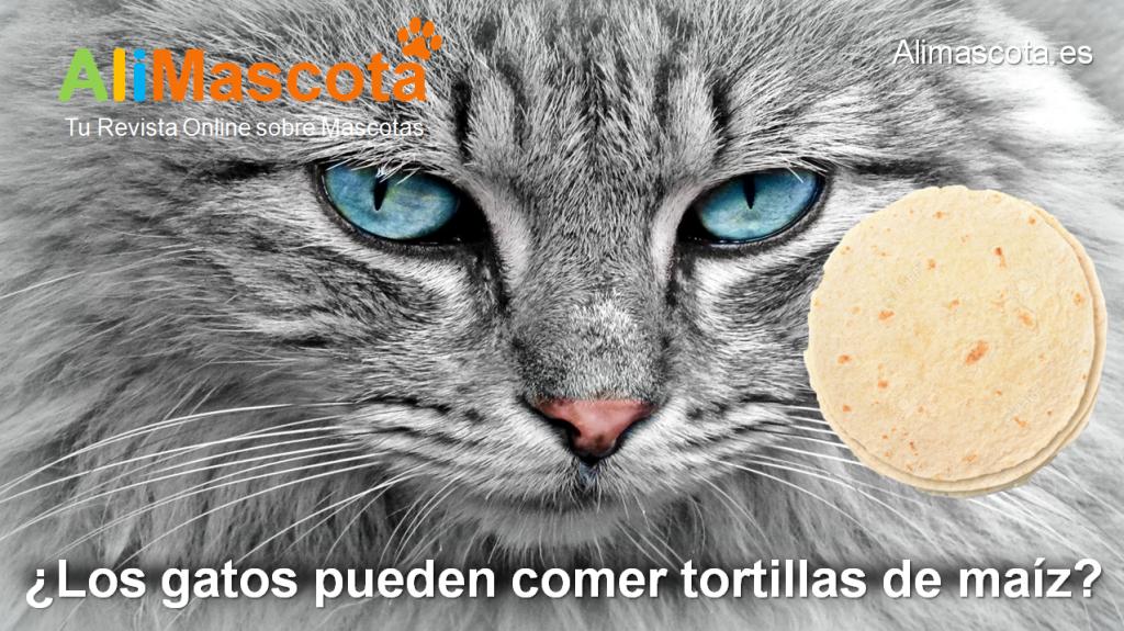 Los gatos pueden comer tortillas de maíz