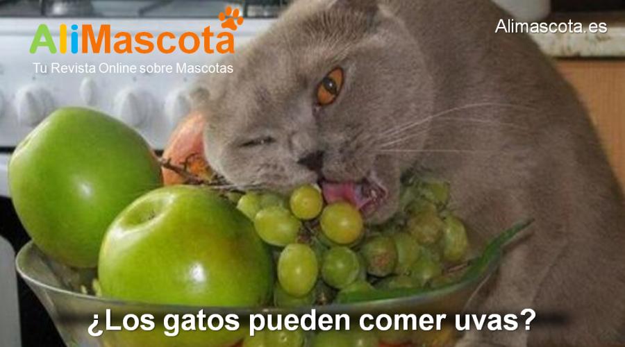 Los gatos pueden comer uvas