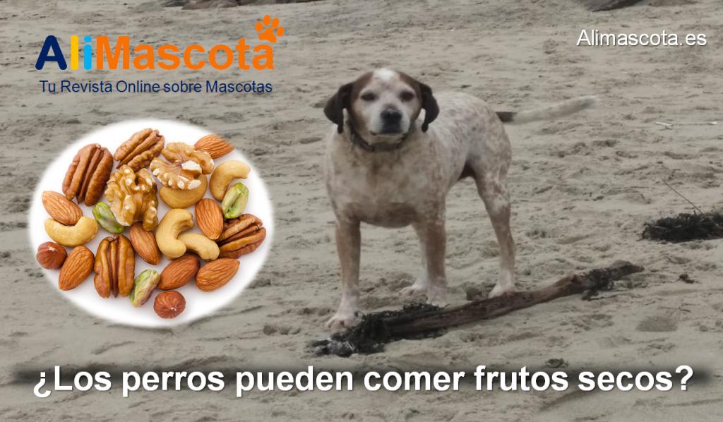 Los perros pueden comer frutos secos