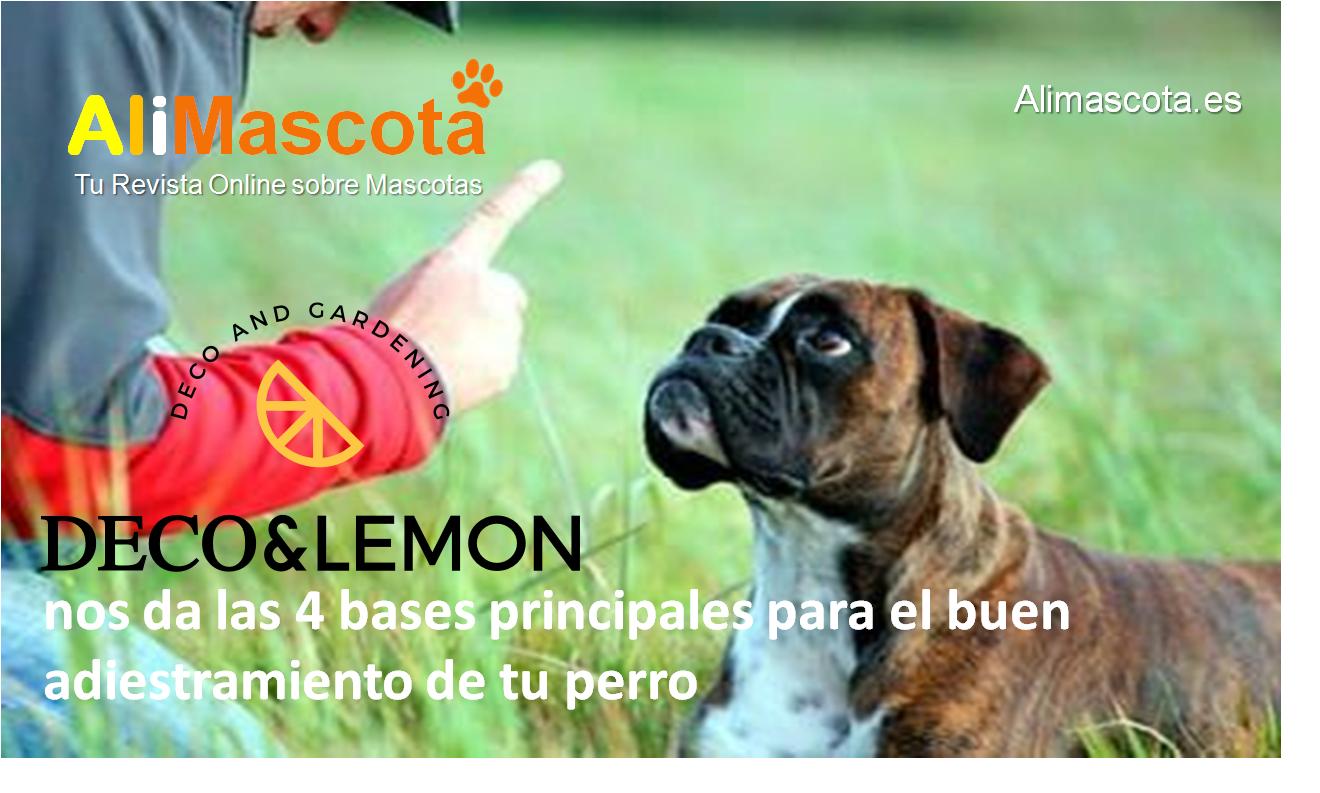 La Tienda Deco & Lemon nos da las 4 bases principales para el buen adiestramiento de tu perro