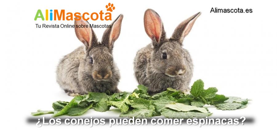 Los conejos pueden comer espinacas