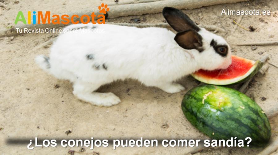 Los conejos pueden comer sandía