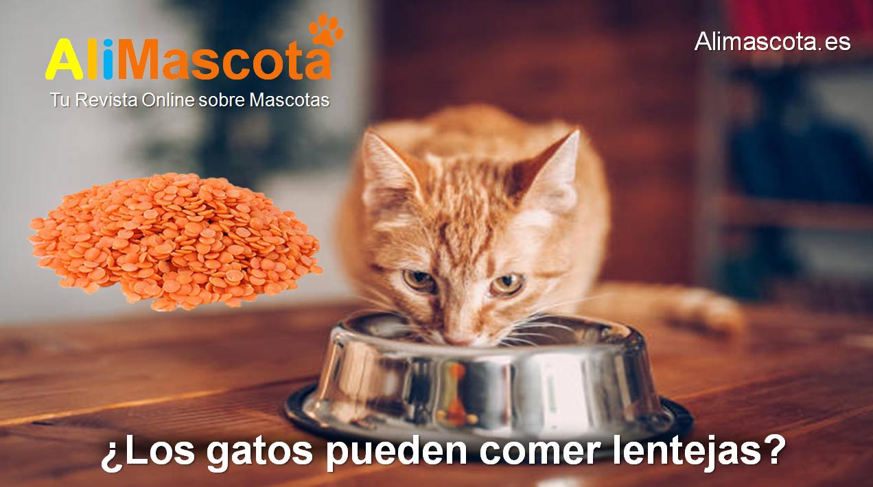 ¿Los gatos pueden comer lentejas?
