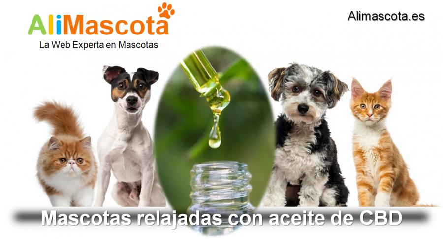 aceite de CBD para mascotas