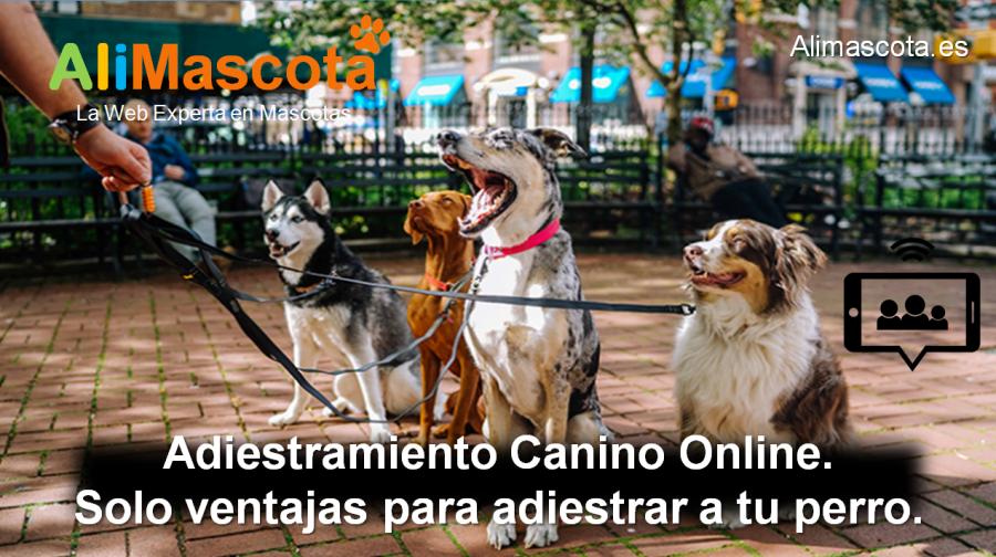 adiestramiento canino online