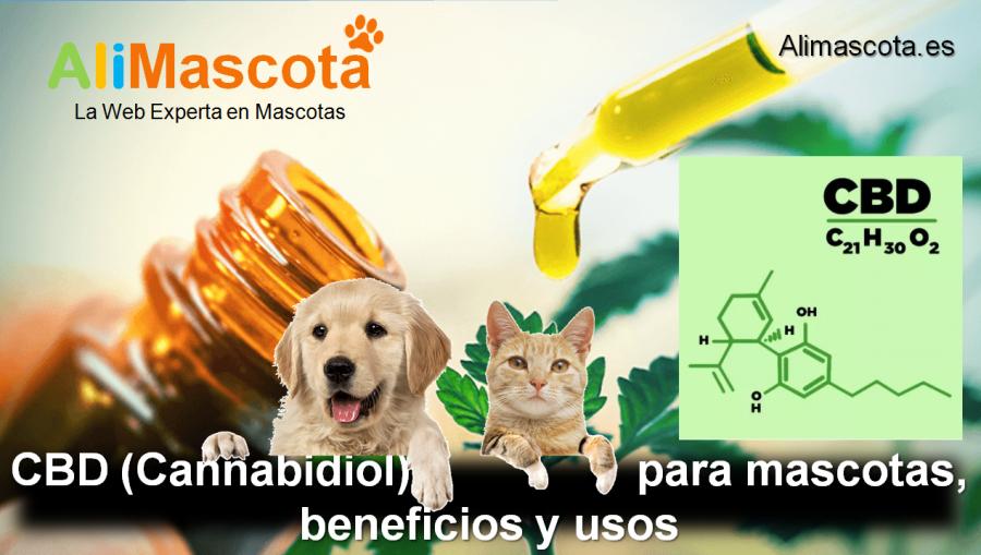 Beneficios del CBD para mascotas