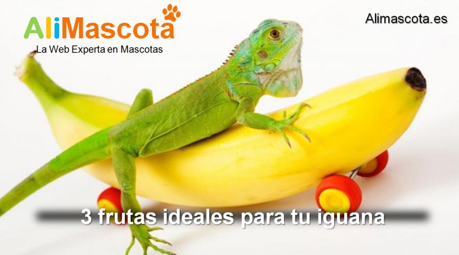 frutas para iguanas