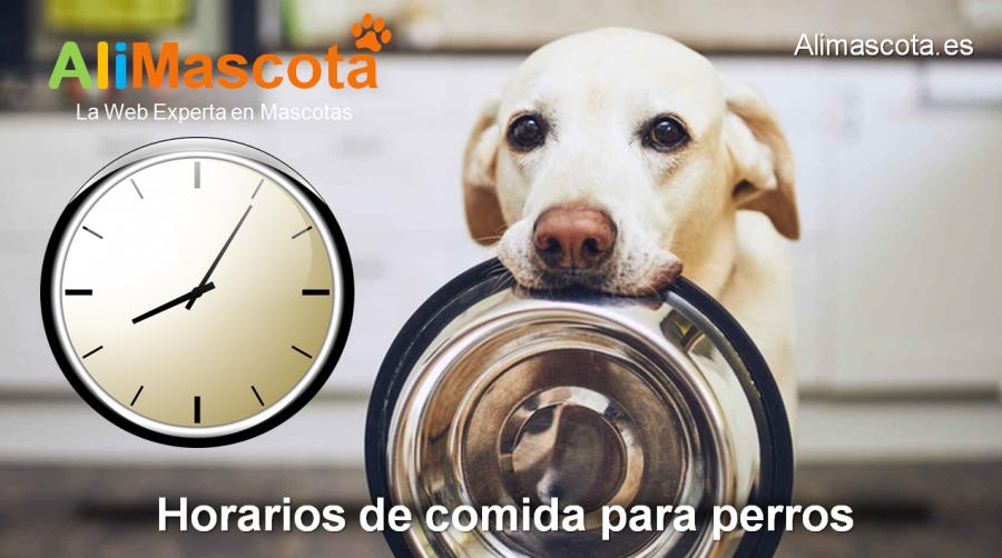 horarios de comida para perros