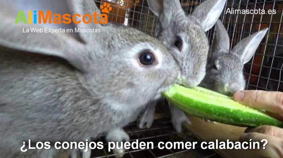 los conejos pueden comer calabacín