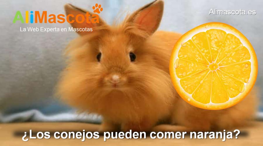 los conejos pueden comer naranja
