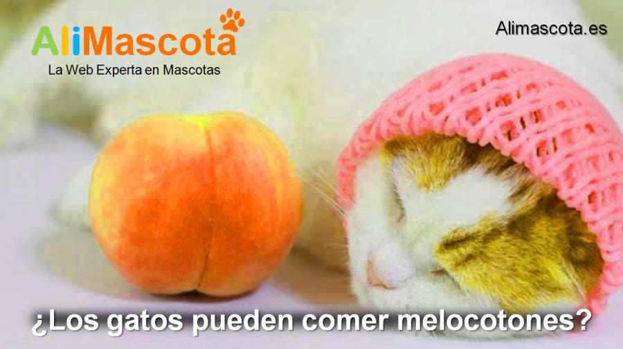 los gatos pueden comer melocotones