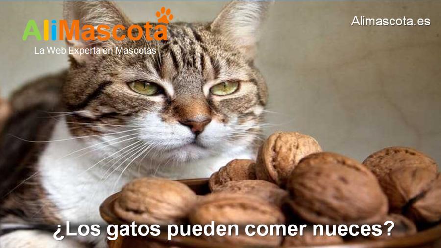 Los gatos pueden comer nueces