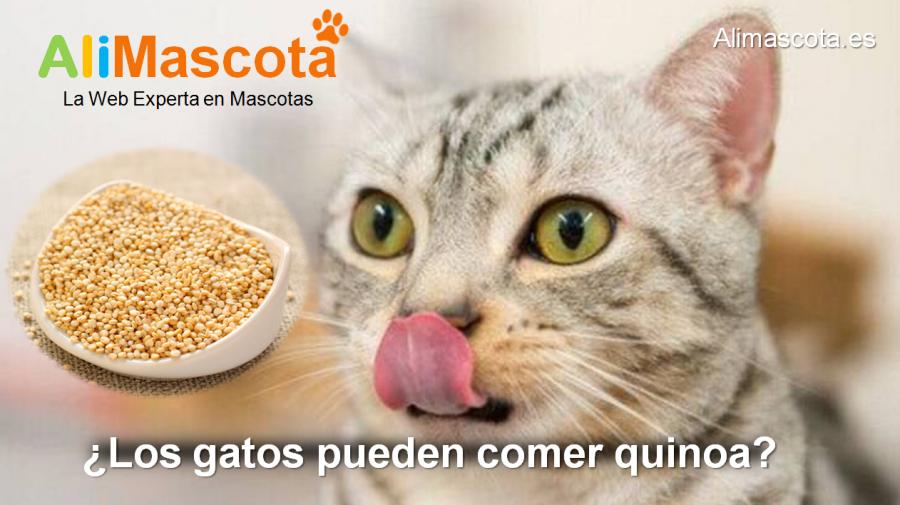 los gatos pueden comer quinoa