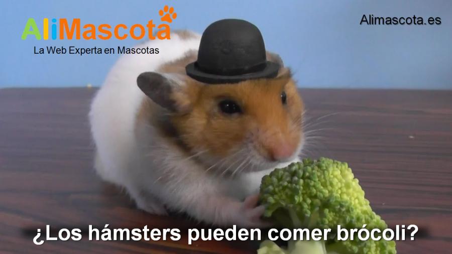 los hámsters pueden comer brócoli
