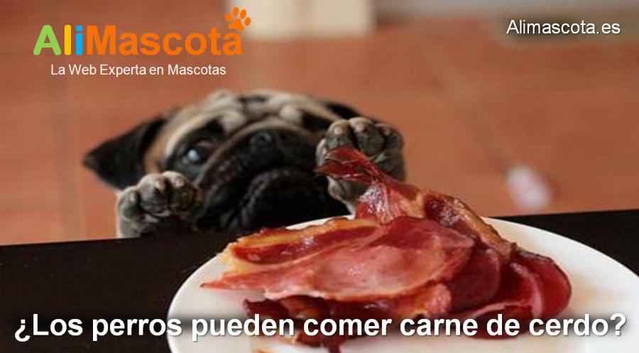 los perros pueden comer carne de cerdo