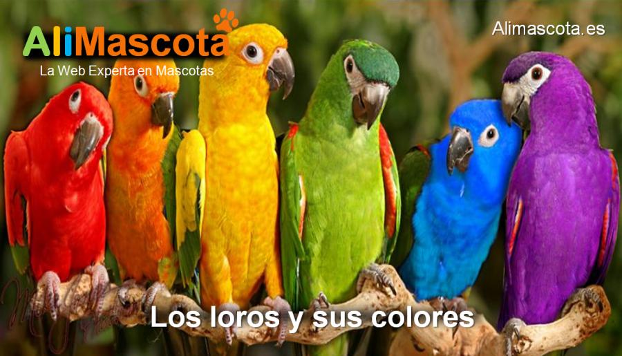 los colores de los loros