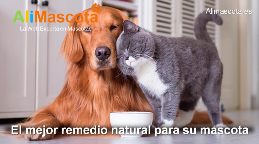 el mejor remedio natural para mascotas