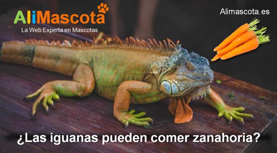 las iguanas pueden comer zanahoria